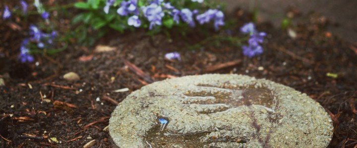 DIY Concrete Stepping Stones